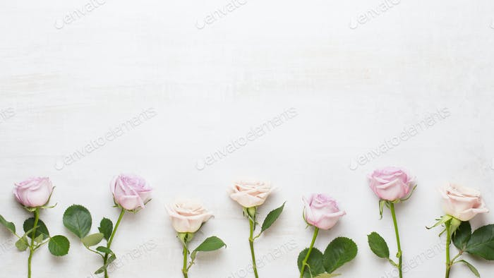 Flowers composition. Frame made of pink rose on gray background. Flat lay, top view, copy space.