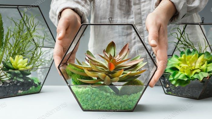 Florist putting florarium with succulent plants on table