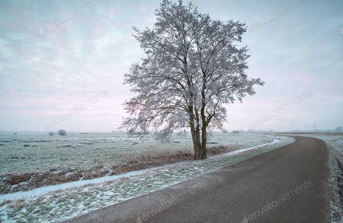 countryside road at frosty morning