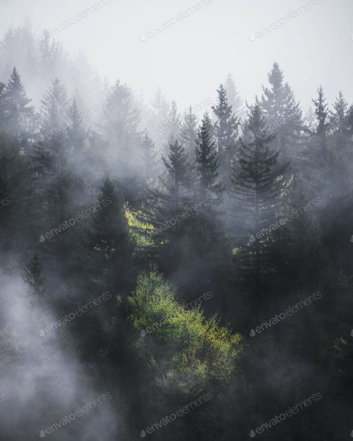 A foggy day in the forest