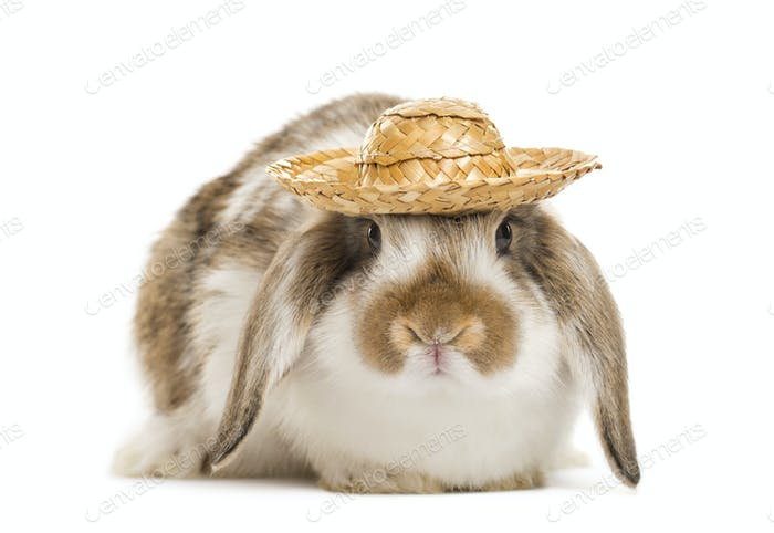 rabbit with hat, isolated on white