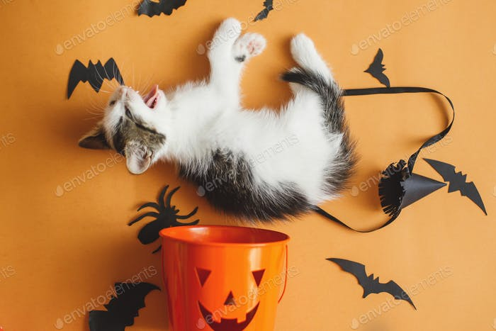 Kitten playing on orange background with black bats and halloween trick or treat bucket