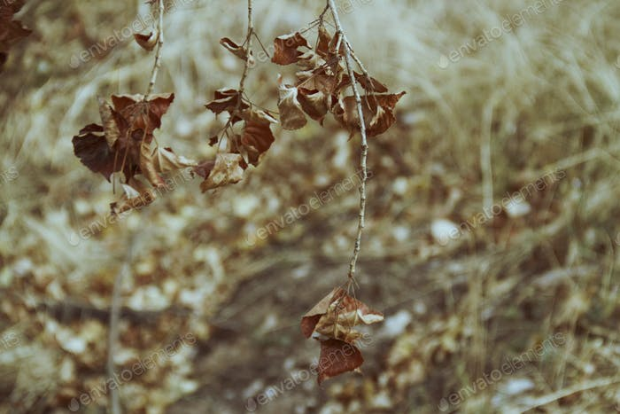 Autumn organic and abstract s