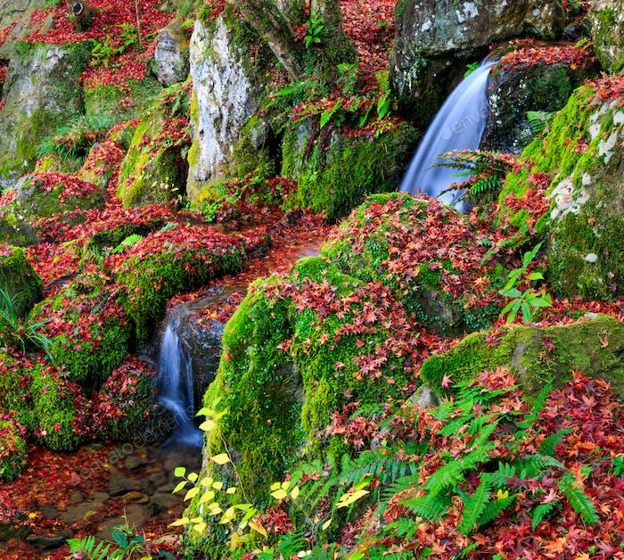 Ein kleiner Wasserfall im Herbst, Kyoto, Japan