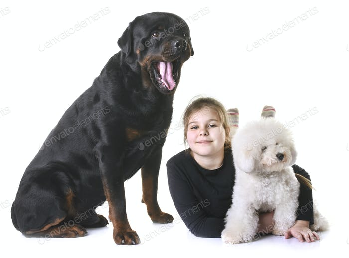 young girl and dogs