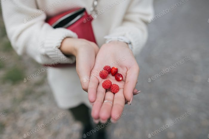 Cropped Shot of Young Woman Holding Ripe Wild Strawberries on Palm