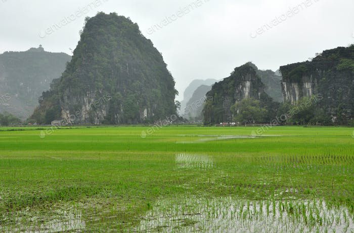 Vietnam landscape. Rice fields and karst towers in Ninh Binh in a cloudy day