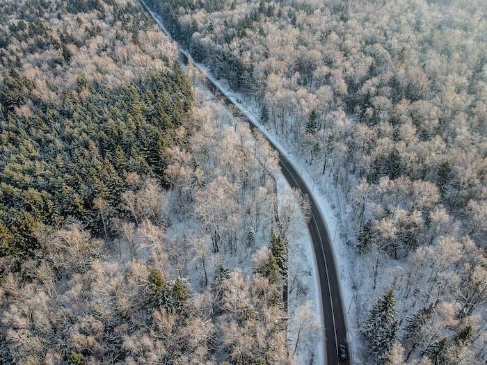 Winterwald mit einer Straße an einem kalten sonnigen Morgen