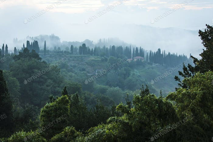 Green and foggy hillside in San Miniato Italy