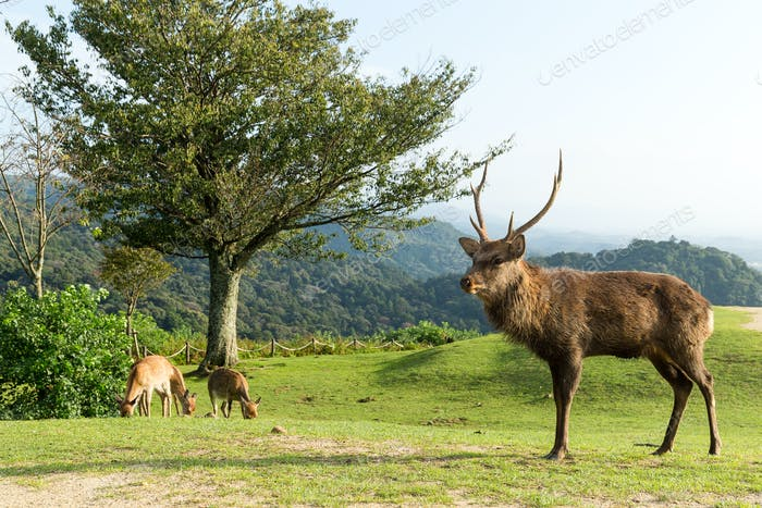 Red deer stag in a mountain