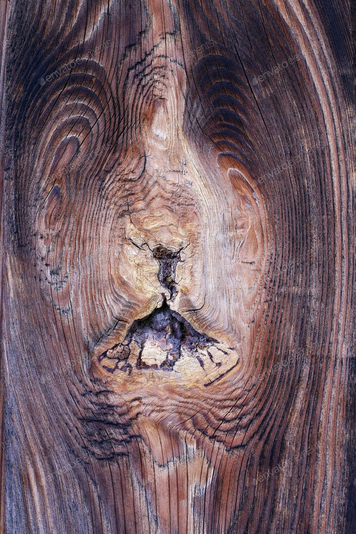 Bizarre knot in wood - wooden texture