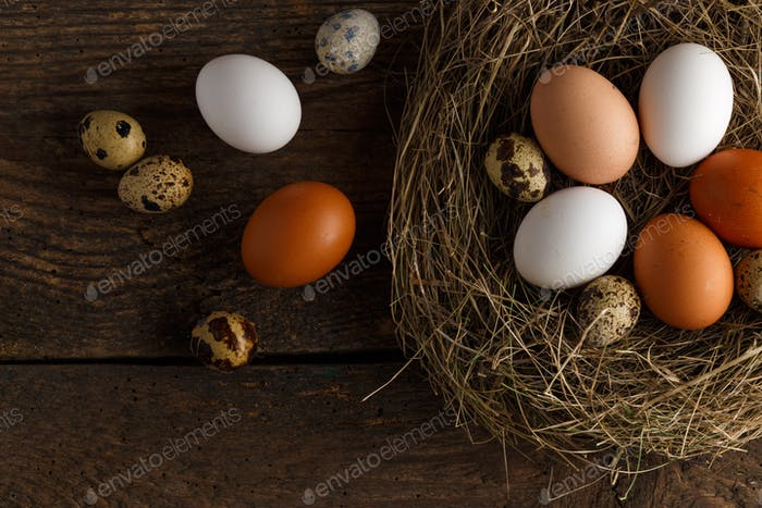 Chicken and quail eggs in a nest on a wooden rustic background