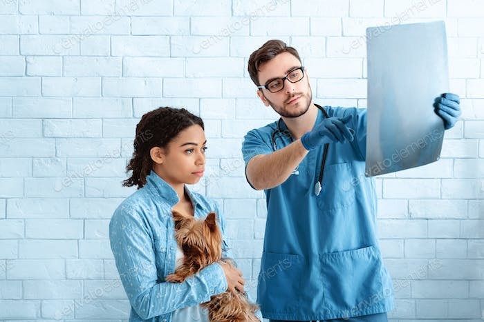 Worried pet owner with dog and veterinary doctor looking at xray in animal clinic