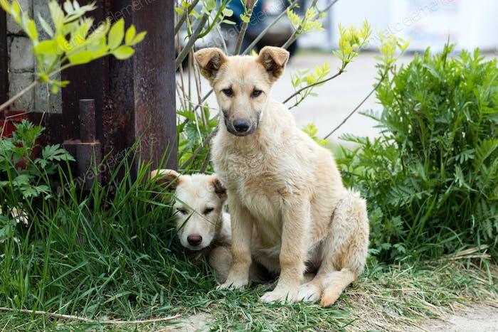 Kleine Welpen von streunenden Hunden