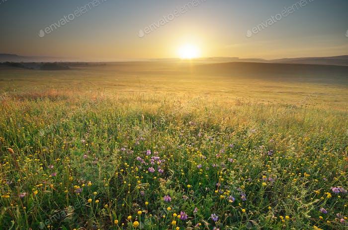 Morning nature landscape.