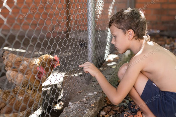 Little boy with farm chickens