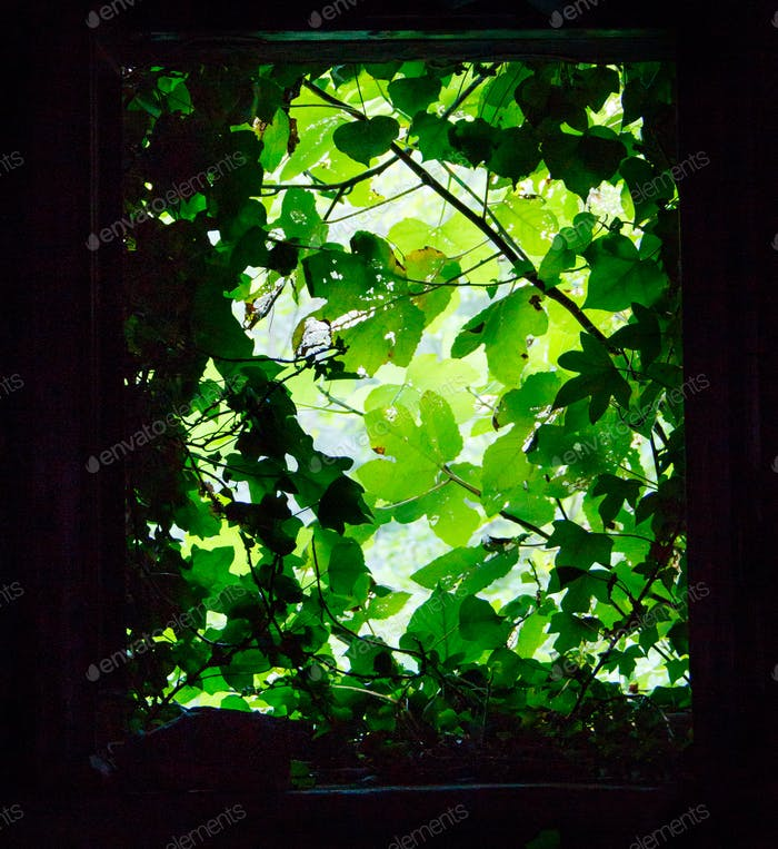 View from a window with green plants around