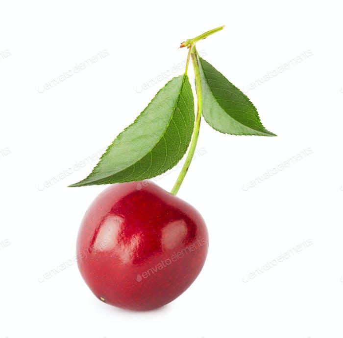 Ripe juicy sweet cherries with leaves