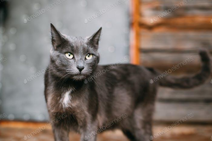 Porträt von russischen blauen Katze Kätzchen auf alten Dorf Rustikale Haus