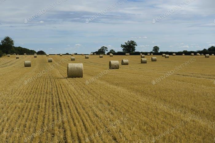 Ein Feld von Stoppeln nach der Ernte geschnitten, und runde Strohballen.