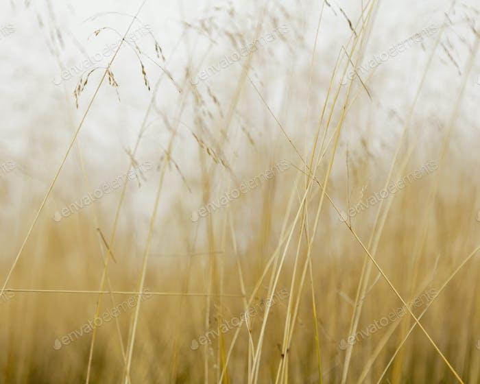 Close up of sea grasses on Long Beach Peninsula, in Washingtn state.