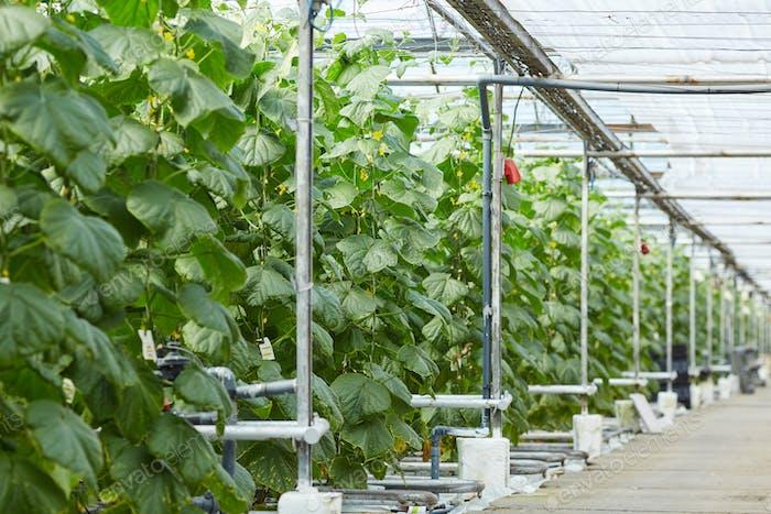 Contemporary interior of greenhouse
