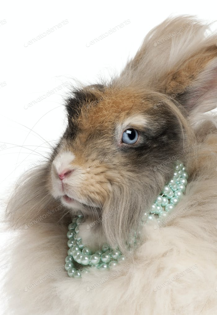 Close-up of English Angora rabbit wearing pearls in front of white background