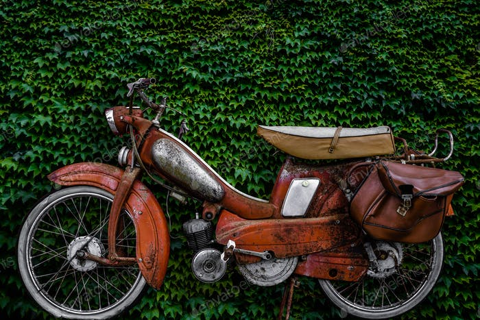 A Vintage Scooter Against a Lush Hedge