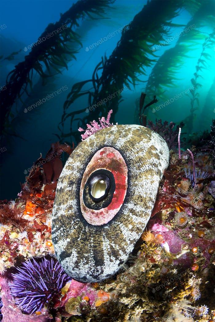 California Riff Meeresleben