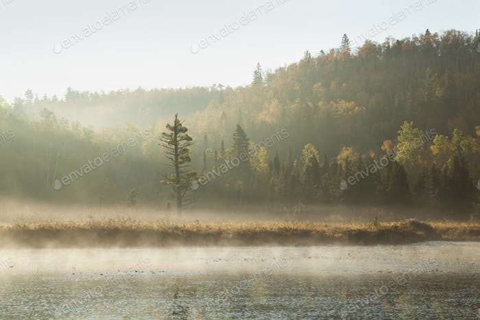 River in Northern Minnesota in Early Morning Mist and Light