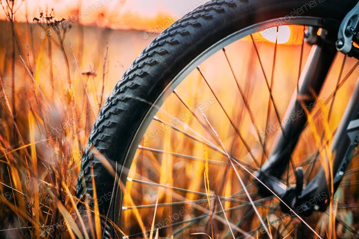 Bicycle Wheel In Dry Autumn Yellow Meadow Grass. Close Up Detail