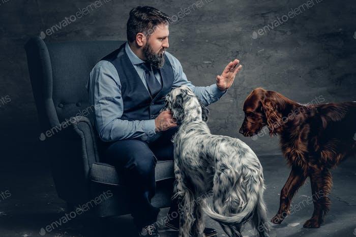 Bärtige männliche und zwei irische Setter Hunde.