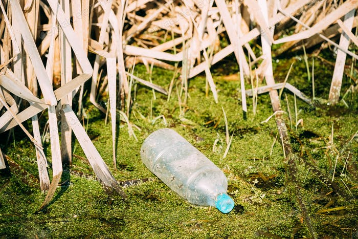Old Plastic Bottle Floats In Water Of Swamp Or Bog. Used Empty B