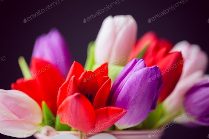 Tulpenstrauß auf schwarzem Hintergrund