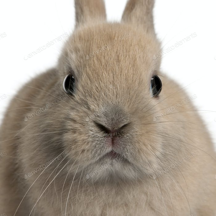 Close-up of young rabbit in front of white background