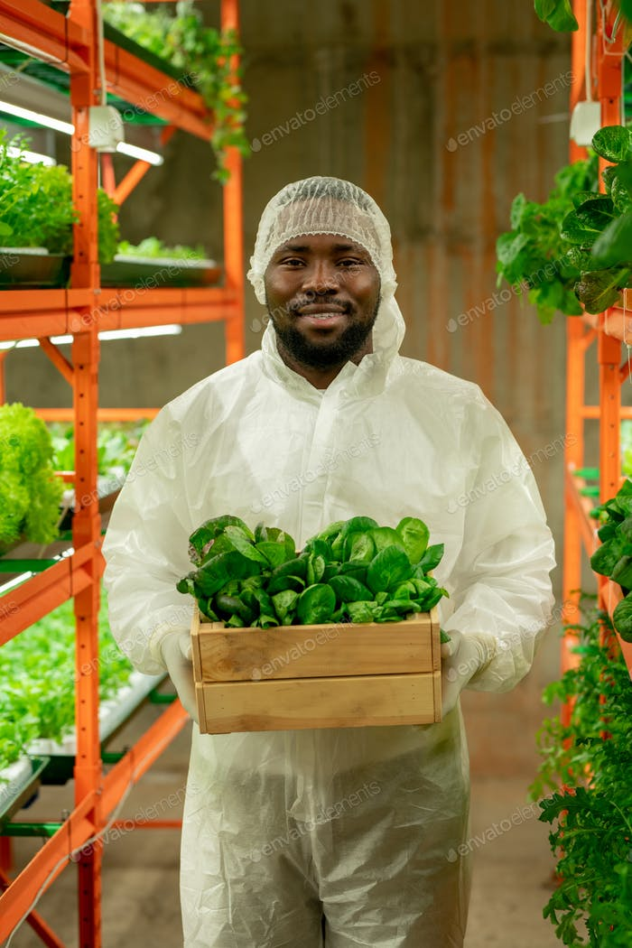 Young cheerful agroengineer of African ethnicity working inside vertical farm