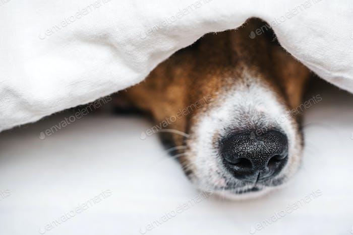 Der Hund auf dem Bett.