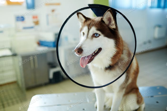 Dog with funnel collar