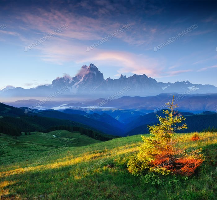wildflowers in the mountains at sunset. Carpathians. Ukraine, Eu