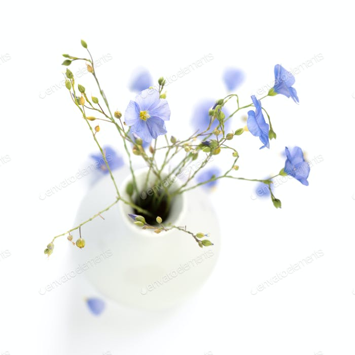 Flax flowers in a vase