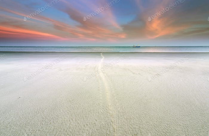 seal tracks on sand to sea at dawn