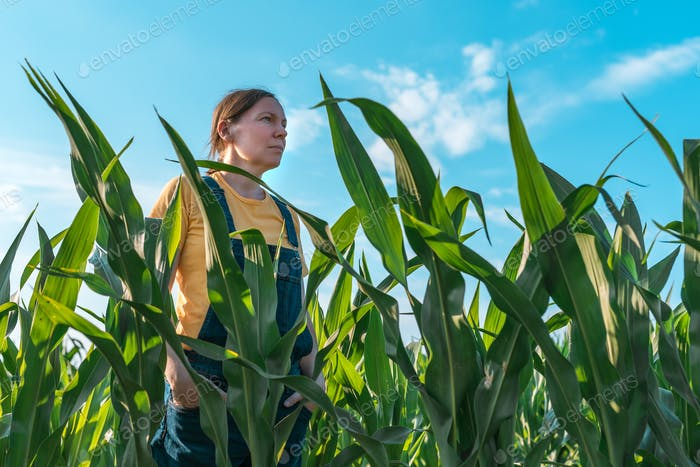 Maisbauer im Feld, Porträt der Agronom Frau