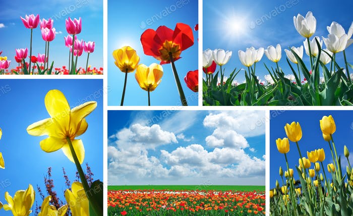 Set from spring tulips