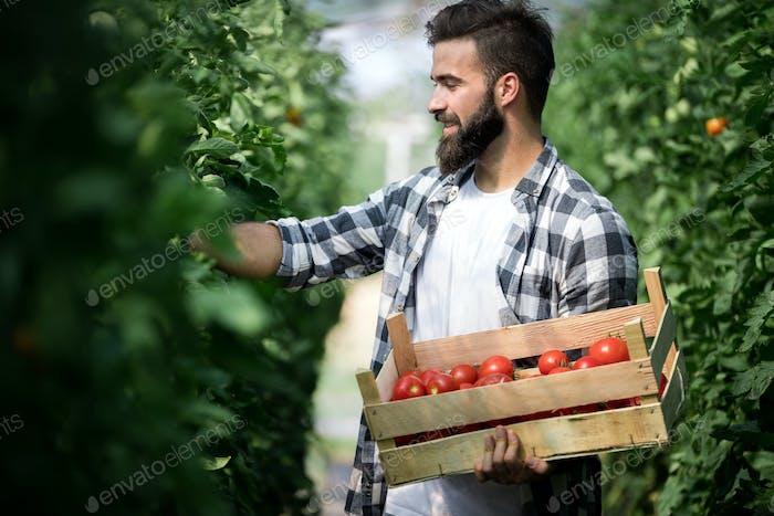 Freundlicher Bauer bei der Arbeit im Gewächshaus
