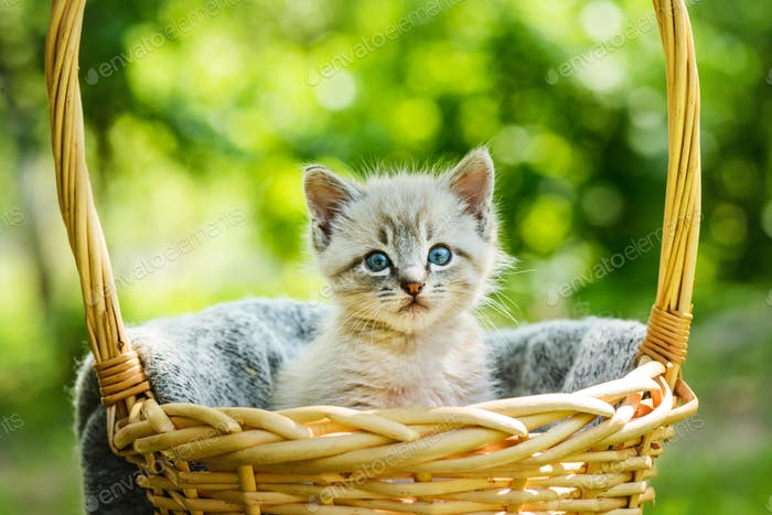 Kleines Kätzchen mit blauem Aye im Korb