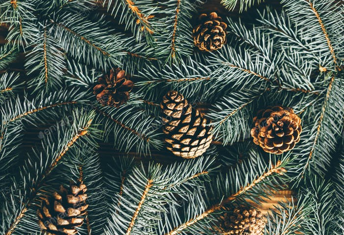 Christmas tree branches and cone on wooden background.