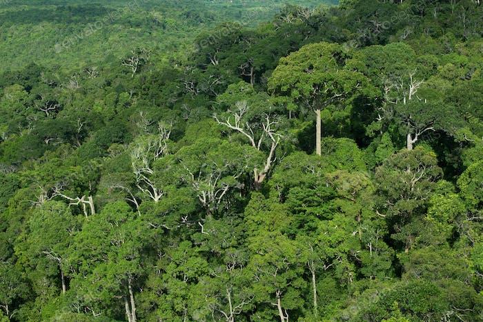 Rainforest jungle background, Thailand