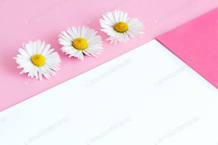 Margaritas blancas sobre fondo rosa y blanco
