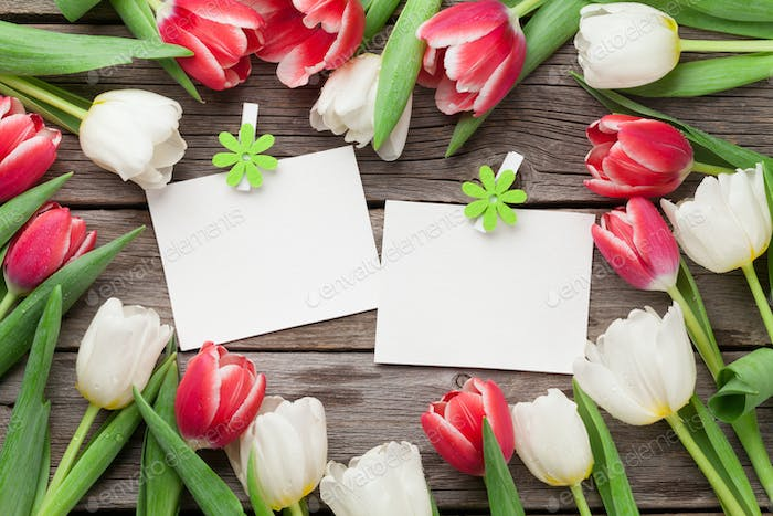 Colorful tulips and photo frames