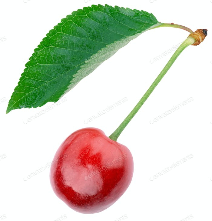 ripe cherries with green leaf